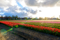 2016-04-23 EuroTrip 09 - Lisse and Tulips-AFK_1753